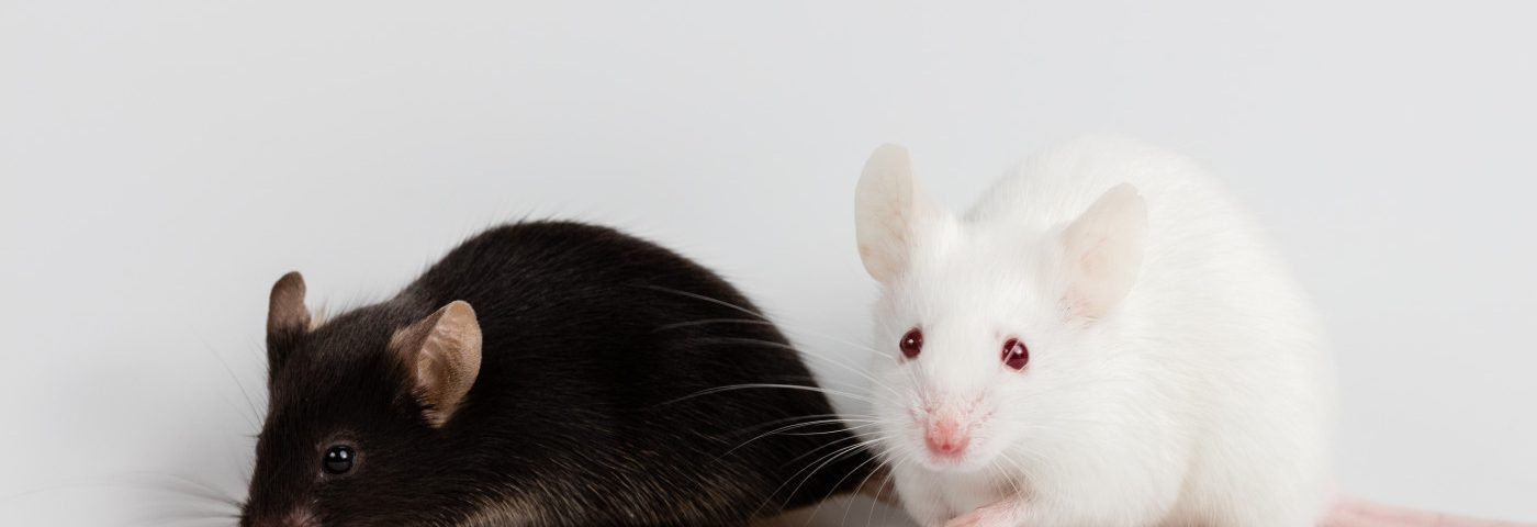 Angelman Syndrome Seizure Susceptibility Probed in UBE3A Mice
