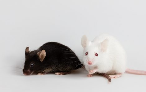Statin Seen to Ease Seizures, Lessen Neuron Excitability in Angelman Mouse Model