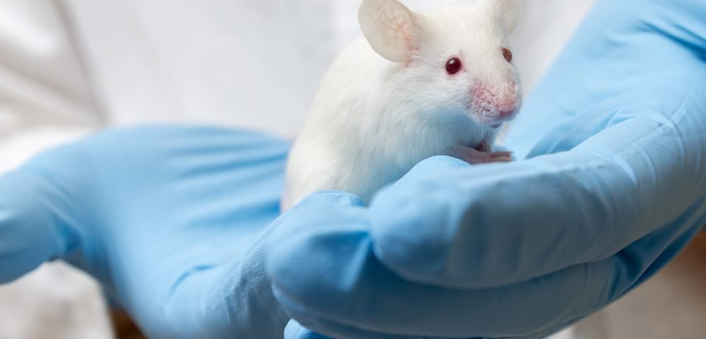 UBE3A Gene Reactivation in Inhibitory Neurons May Prevent Seizures, Angelman Mouse Study Shows