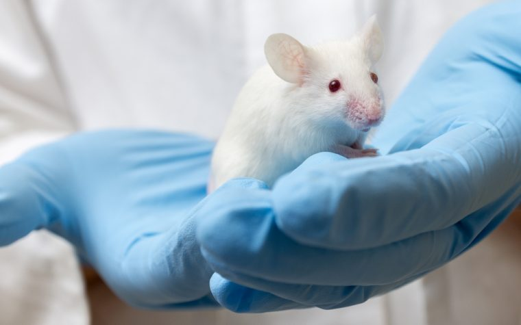 Angelman Symptoms Linked to Loss of Ube3a Gene in Specific Nerve Cells, Mouse Study Suggests